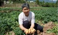 【伍星供应链】恩施老品种马尔科富硒小土豆,单日可发10000单,欢迎各渠道对接