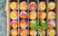 【山东农产品优质供货链】6月是崂山蜜杏和小油蟠桃上市的季节,期待与您合作!