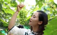 【葡萄季的第4季】目前香印青提在红河,大理产地直发,日供应能力5000单