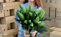 【云南鲜花】有自营鲜花仓库,高峰日处理订单量15000单,欢迎优质渠道对接!