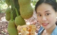 【海南榴莲蜜】是一种稀有热带水果,支持航空落地配、一件代发,欢迎各渠道洽谈合作