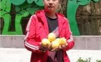 【蒙阴黄金油桃】提供一件代发,周边城市2000件起可整车配送,欢迎对接洽谈!