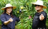 【星鲜达X楚三湖国营农场】楚三湖黄桃已进入预售期,预计30号可发货,欢迎各位团队对接