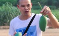【7个芒果】专注百色芒果,其中以桂七尤为突出,提供线上一件代发等,欢迎对接