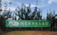 【福建巧农哥】有自己赣南脐橙园1300余亩,茶园700余亩,欢迎对接合作