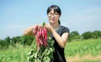【天目山小香薯】自有种植基地500多亩,支持一件代发,落地配,社区团购