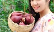【山东烟台:鸭梨山大】专业做水果,支持一件代发、落地配,欢迎各渠道对接
