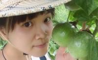 【福建安语 福建漳州黄金百香果】自基地60亩,连带合作社果园500亩,欢迎对接