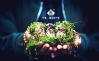 """【方藏~藏地精品松茸供应链】采挖主产区在""""中国松茸之乡""""-雅江,欢迎对接"""