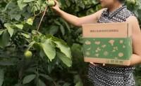 【山西绿海林果鲜食核桃】植基地占地1400余亩,共计16个品种,日发货量5000+