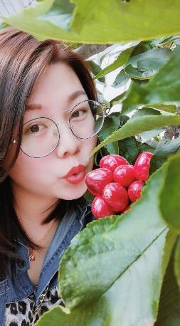 山东大樱桃:樱珠