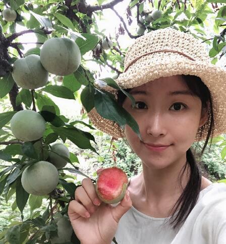 湖北苹果李