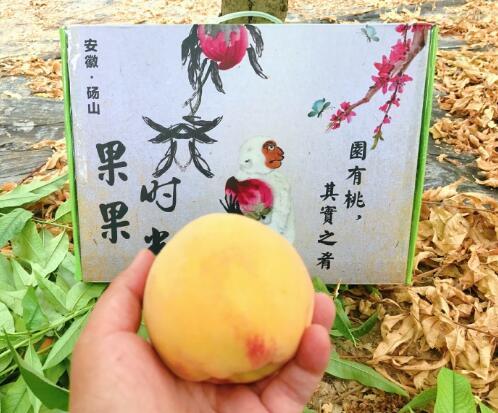 安徽砀山:黄桃